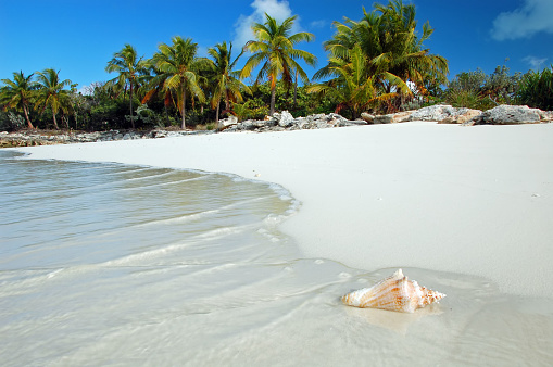 Bahamas「Shell washes up on tropical beach」:スマホ壁紙(8)