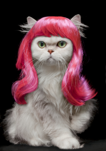 Hot Pink「White Persian Cat wearing hot pink wig」:スマホ壁紙(0)