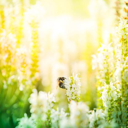 最上部「マルハナバチ pollinating 植物の草地」:スマホ壁紙(19)