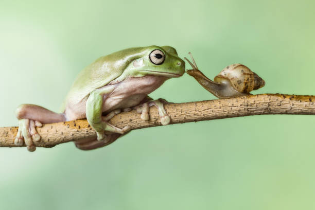 Frog and a snail on a branch:スマホ壁紙(壁紙.com)