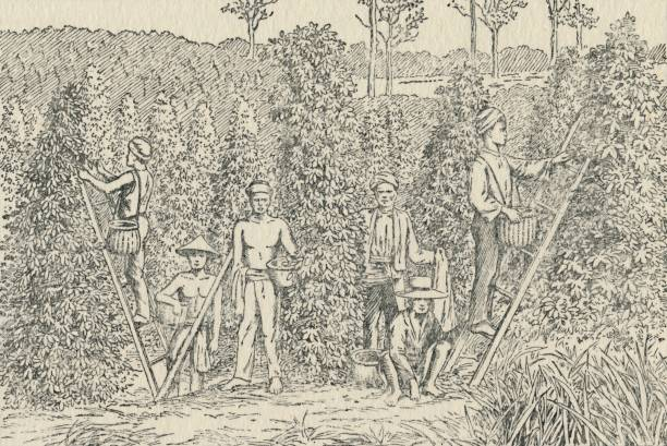 Pepper Plantation:ニュース(壁紙.com)