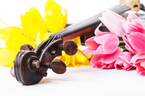 花「Black old violin」:スマホ壁紙(19)
