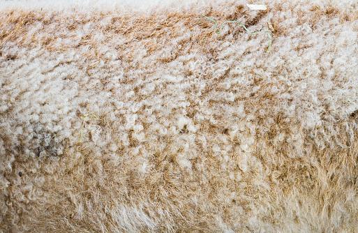 Wool「Sheep wool background」:スマホ壁紙(5)