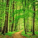 Deciduous tree壁紙の画像(壁紙.com)