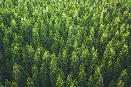 Beauty In Nature「Green Forest」:スマホ壁紙(7)