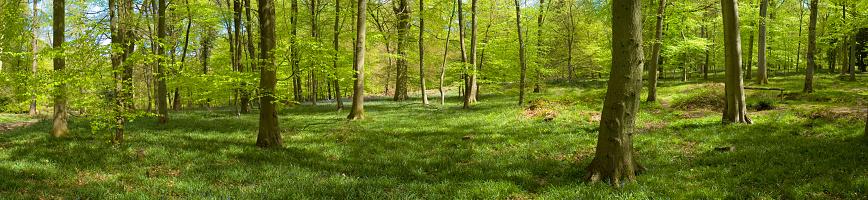 Copse「Green forest」:スマホ壁紙(17)