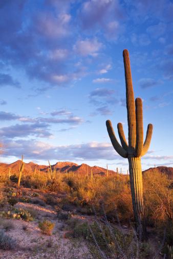 National Monument「Sonoran Desert and Saguaro Cactus」:スマホ壁紙(5)