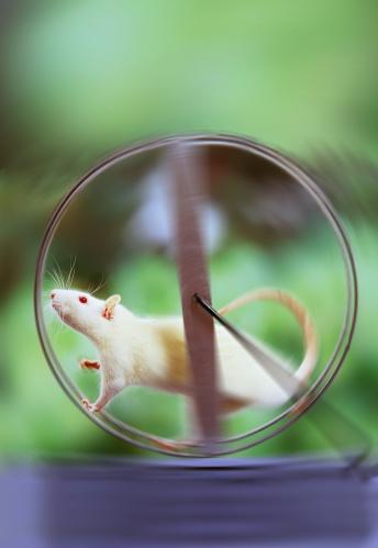 Effort「White rat on exercise wheel, blurred motion (Digital Enhancement)」:スマホ壁紙(18)