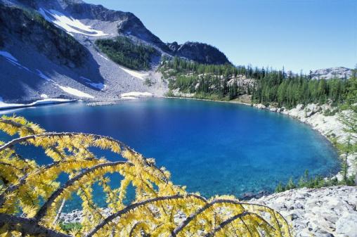 Okanogan National Forest「Larch (larix sp.) tree and lake, autumn」:スマホ壁紙(3)