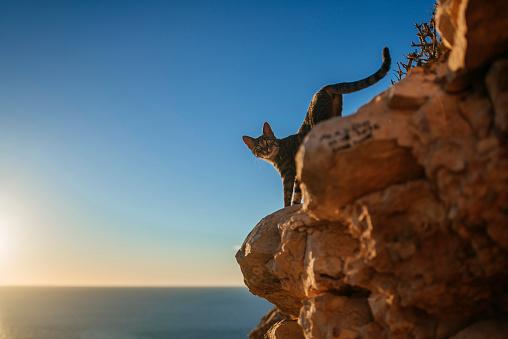 Freedom「Cat walking down rocks at the sea」:スマホ壁紙(0)