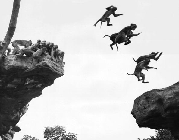William Vanderson「Flying Monkeys」:写真・画像(12)[壁紙.com]