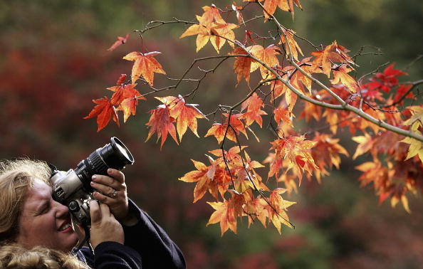 葉・植物「Autumn Colours At Westonbirt Aboretum」:写真・画像(9)[壁紙.com]