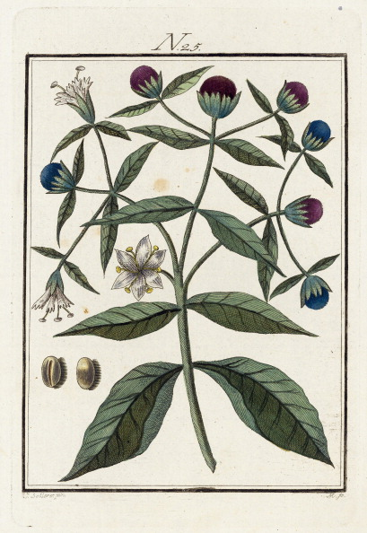 絵「The Coffeeplant. From Die Welt In Bildern. Band 3. Baumeister. Vienna. 1790.」:写真・画像(4)[壁紙.com]