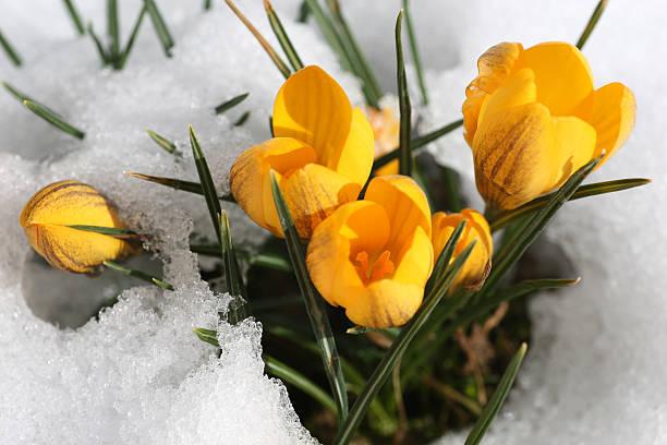 Spring is coming:スマホ壁紙(壁紙.com)