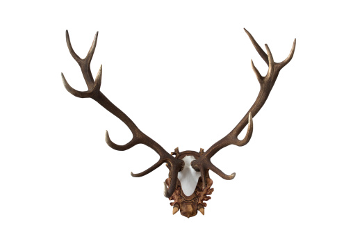 ガラス「Antlers」:スマホ壁紙(5)