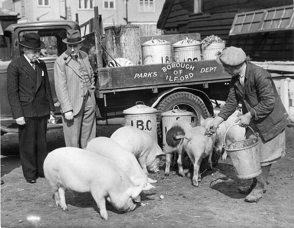 Feeding「Council Pigs」:写真・画像(14)[壁紙.com]