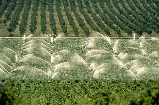 Sprinkler「Watering Asparagus Field」:スマホ壁紙(5)