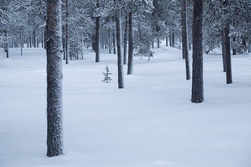 Finland「Taiga forest in snow, Finland」:スマホ壁紙(10)