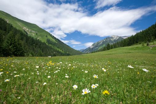 Lech「 tyrolean summer meadows」:スマホ壁紙(10)