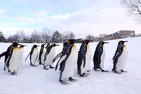 Hokkaido「Up Close Viewing Of Animals Attracts Visitors To Asahiyama Zoo」:写真・画像(1)[壁紙.com]