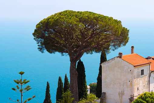 Amalfi Coast「Big tree and old house overlooking Amalfi Coast, Ravello, Salerno Province, Compania Region, Italy」:スマホ壁紙(11)