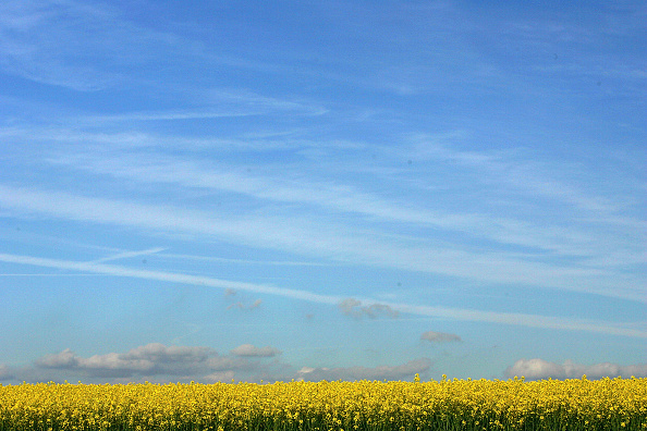 Sunlight「Rapeseed In Bloom Shows Early Signs Of Summer」:写真・画像(7)[壁紙.com]