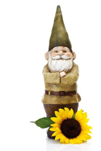 Garden Gnome「Garden gnome and sunflower」:スマホ壁紙(15)