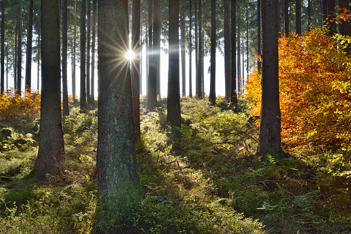 Harz Mountain「Autumn in forest, backlight with sunbeams. Harz, Harz National Park, Saxony-Anhalt, Germany, Europe.」:スマホ壁紙(10)
