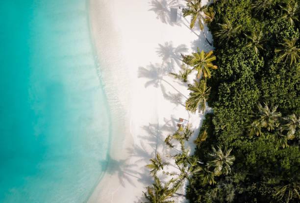 上から熱帯島ヤシの木のビーチ:スマホ壁紙(壁紙.com)