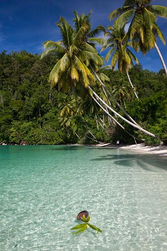 Arafura Sea「Tropical Island at Strait of Iris, Indonesia」:スマホ壁紙(10)