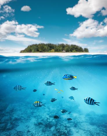 Diving Into Water「Tropical Island」:スマホ壁紙(10)