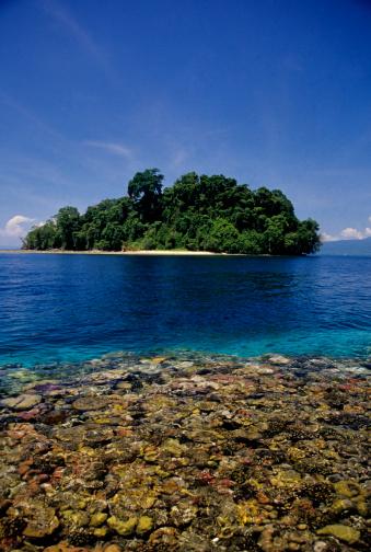 Shallow「Tropical Island」:スマホ壁紙(6)