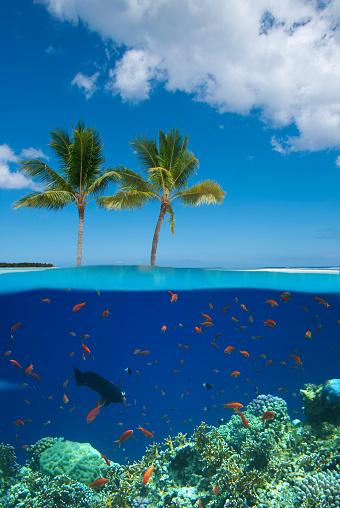 サンゴ「熱帯の島、コーラルリーフ」:スマホ壁紙(13)