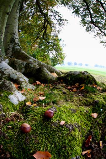 栗「Nuts And Fallen Leaves At The Foot Of A Tree」:スマホ壁紙(5)