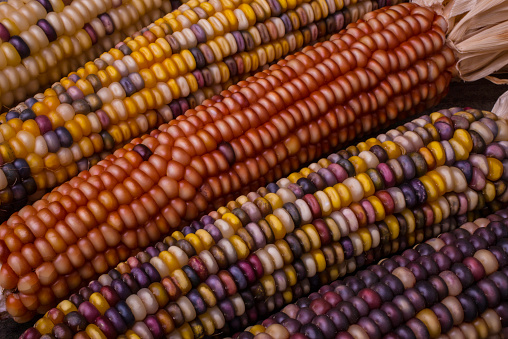 Indian Corn「Colorful Indian corn」:スマホ壁紙(7)