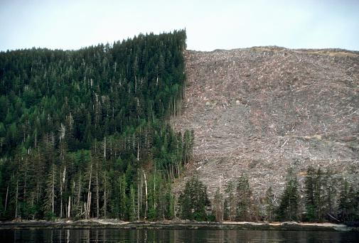 Deforestation「Clearcutting on Lyell Island」:スマホ壁紙(7)