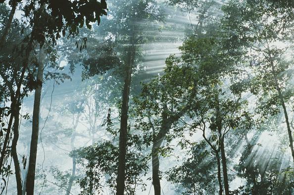 Amazon Rainforest「Amazon Jungle」:写真・画像(10)[壁紙.com]