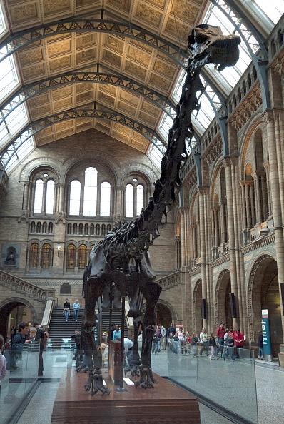 Natural History Museum - London「Nat His Museum」:写真・画像(10)[壁紙.com]