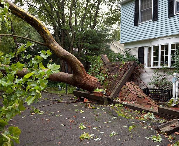 ダメージから歩道倒れた木に根こそぎ竜巻:スマホ壁紙(壁紙.com)