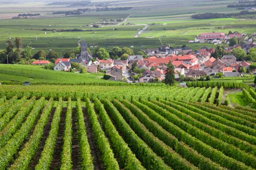 France「Burgundy region」:スマホ壁紙(14)