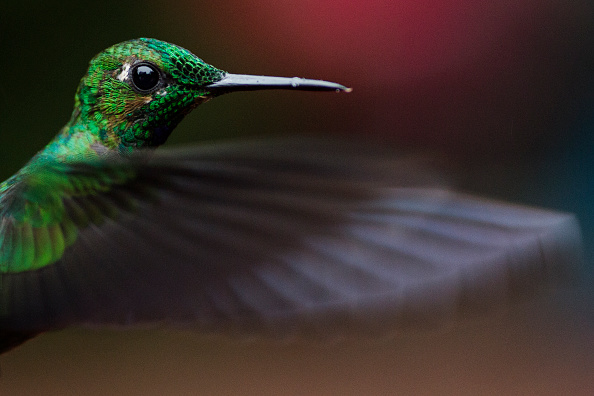 Bird「Hummingbirds Of Costa Rica」:写真・画像(16)[壁紙.com]