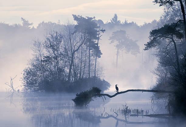 Sunrise over misty lake in the Netherlands.:スマホ壁紙(壁紙.com)