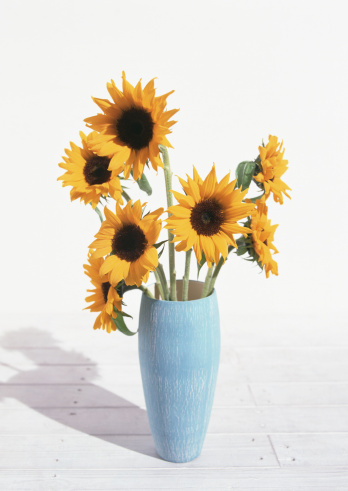 ひまわり「Sunflower」:スマホ壁紙(3)