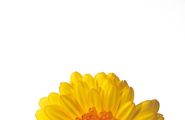 Sunflower, part of:スマホ壁紙(壁紙.com)