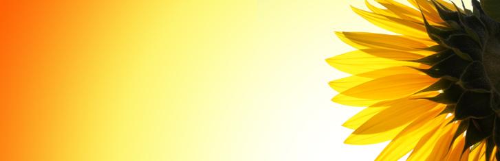 ひまわり「サンフラワー」:スマホ壁紙(16)