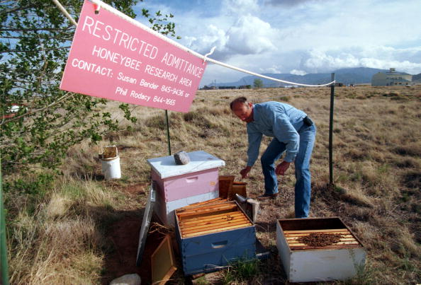 Sandia Mountains「Bee land mine detection experiment」:写真・画像(10)[壁紙.com]