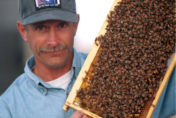 Sandia Mountains「Bee keeper Gary Bender holds a honeycomb」:写真・画像(7)[壁紙.com]