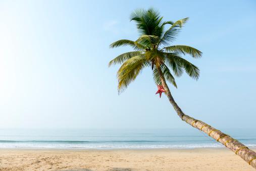 Indian Ocean「Beach in Goa, Konkan, India」:スマホ壁紙(15)