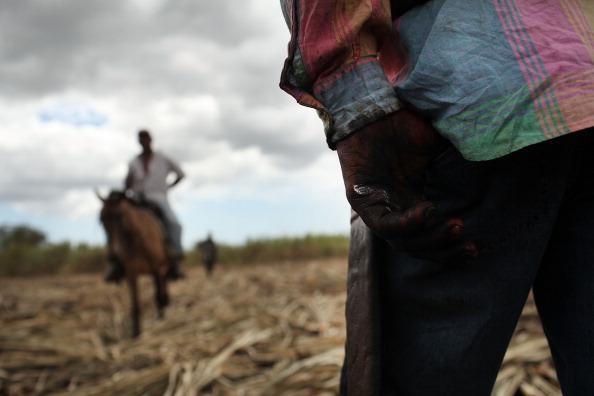 Grass Family「Haitians Live Precarious Existence on DR Agricultural Plantations」:写真・画像(5)[壁紙.com]
