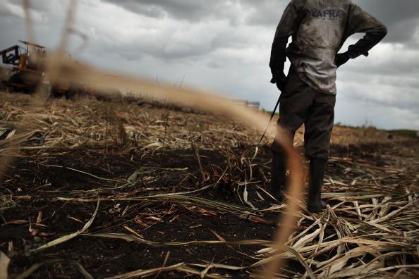 Sugar Cane「Haitians Live Precarious Existence on DR Agricultural Plantations」:写真・画像(16)[壁紙.com]